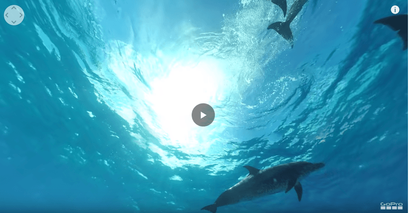 capture of a 360 degree video of a wild dolphin in ocean