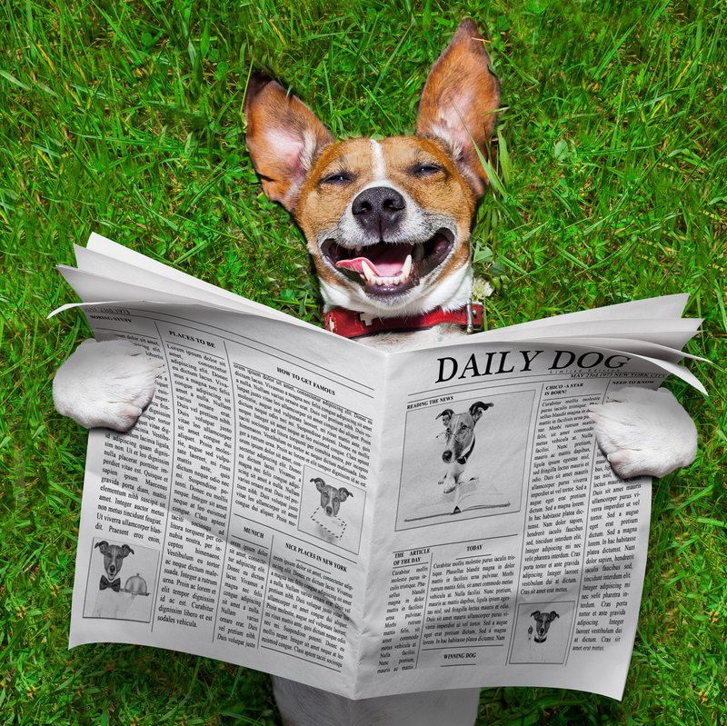 Happy Dog reading newspaper