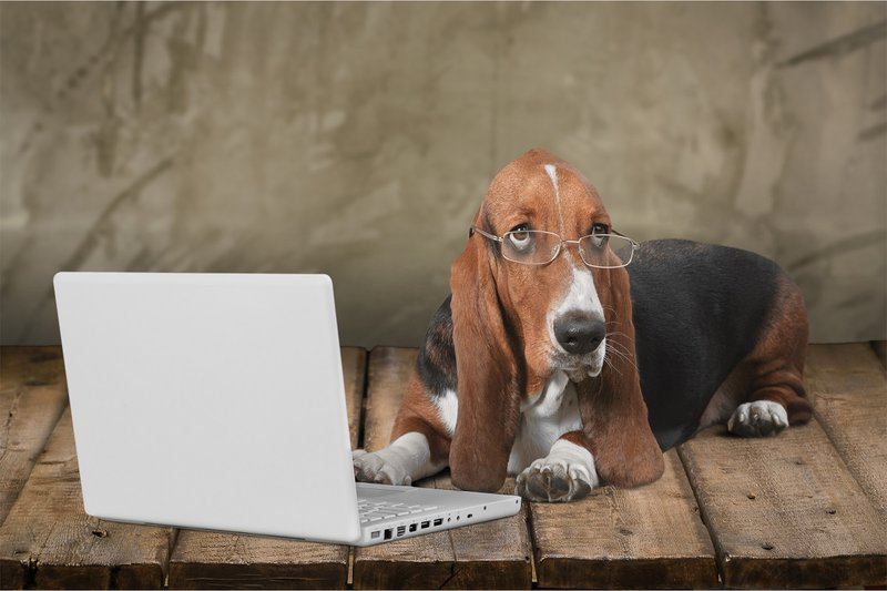 A dog using laptop