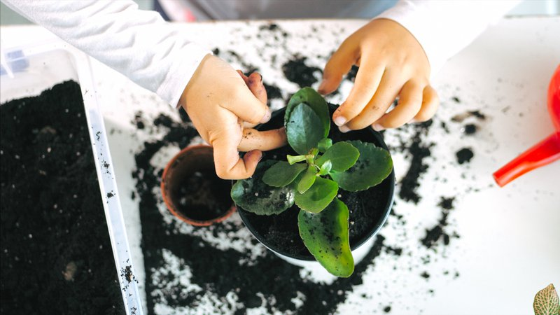 Little child girl is tamps the soil while a plants a houseplant at home, indoor